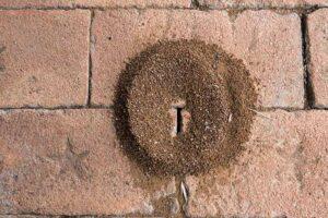 ant nest on brick paver